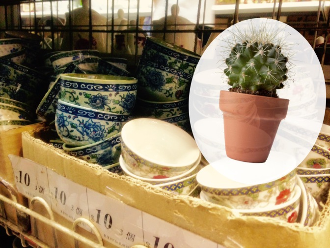 Cactus in a Tea Cup: A Love/Hate Story
